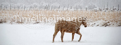 Horse Treads Winter Pasture
