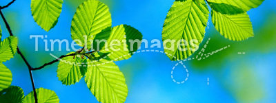 Bright green leafs