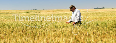Farmer in Durum Wheat Field