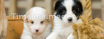 Puppies. Two adorable puppies in a wooden cradle