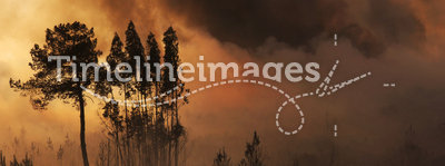 Fire and forest