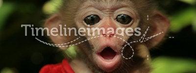 Monkey's baby