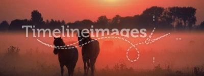 Horses Sunrise mist