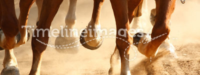 Galloping Horse Hooves