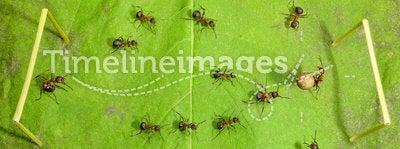 Micro football - ants soccer