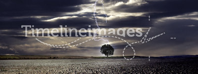 Lightning and The Tree