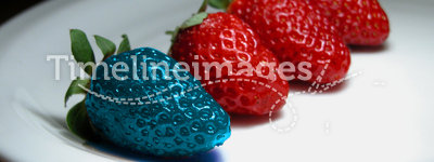Different - genetically modified food. Different than the rest - alone - blue strawberry. Concept for genetically modified food