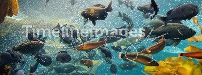 Aquarium. Fish in the the Kelp Forest Monterey Bay Aquarium