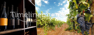 Wine bottle and vineyard