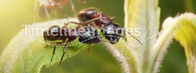 ants top secret