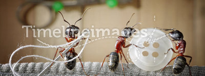 Tailor ant and team of ants sewing wear, teamwork