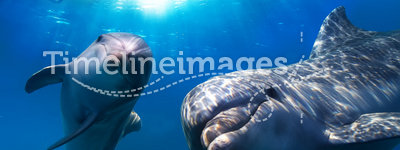 Two funny dolphins smiling underwater. Two dolphins underwater and breaking splashing wave above them