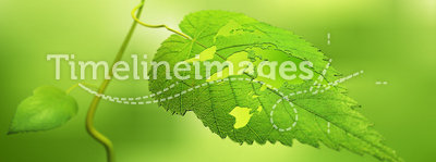 Leaf with a world map. Close up view of a leaf with the world map cut out - ecology concept