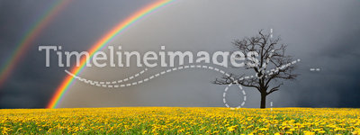 Field and dead tree under cloudy sky with rainbow
