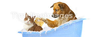 Cat-wash. Dog and cat in a bathtub