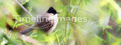 A bird on spring branch