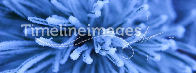 Frost. Water is changed winter and create various fabulous forms