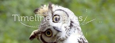 Huh? Owl