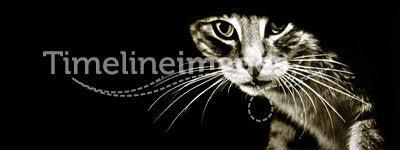 Mousetrap Hole Cat