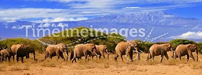 Kilimanjaro Mountain And Elephants Kenya Africa
