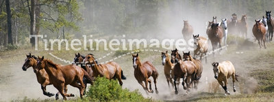 Galloping Horse Herd
