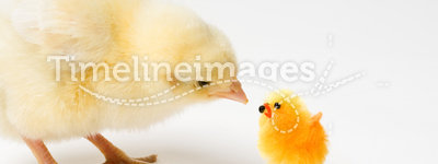 Curious Easter Chick and His Friend