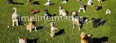 Dogs Dog Park Training