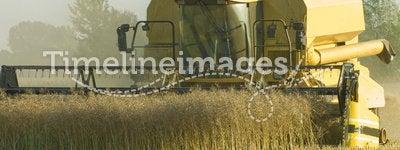 Combine harvester during canola harvest