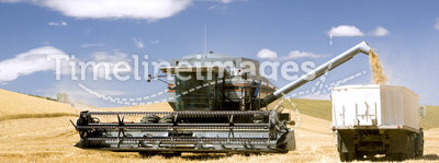 Harvesting Wheat For Profit