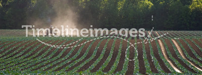 Tractor working field