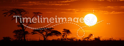 Africa safari sunset