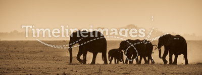 Silhouettes of elephants