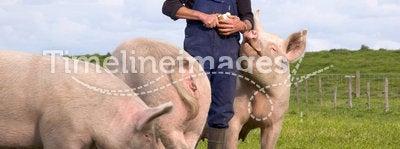 Pigs Farmer