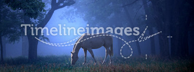 White Horse in the Blue Mist