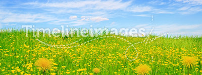 Flowering green field and sun sky