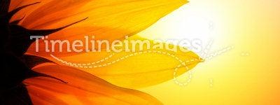Sunflower flower. Yellow sunflower flower petals sunset sky