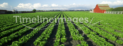 Scenic Farming