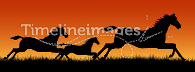 Wild horses running at sunset